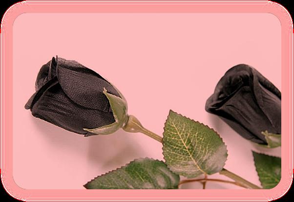Розовая магия. Целебные и магические свойства розы. A__aa_10