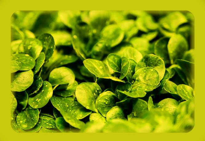 Салат-латук. Aa26