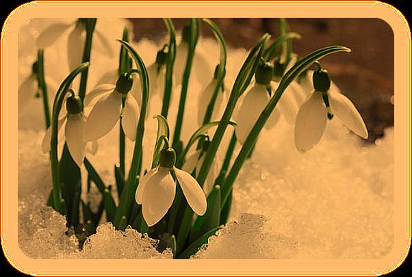 Языческий Календарь событий на Март. Aa_2110