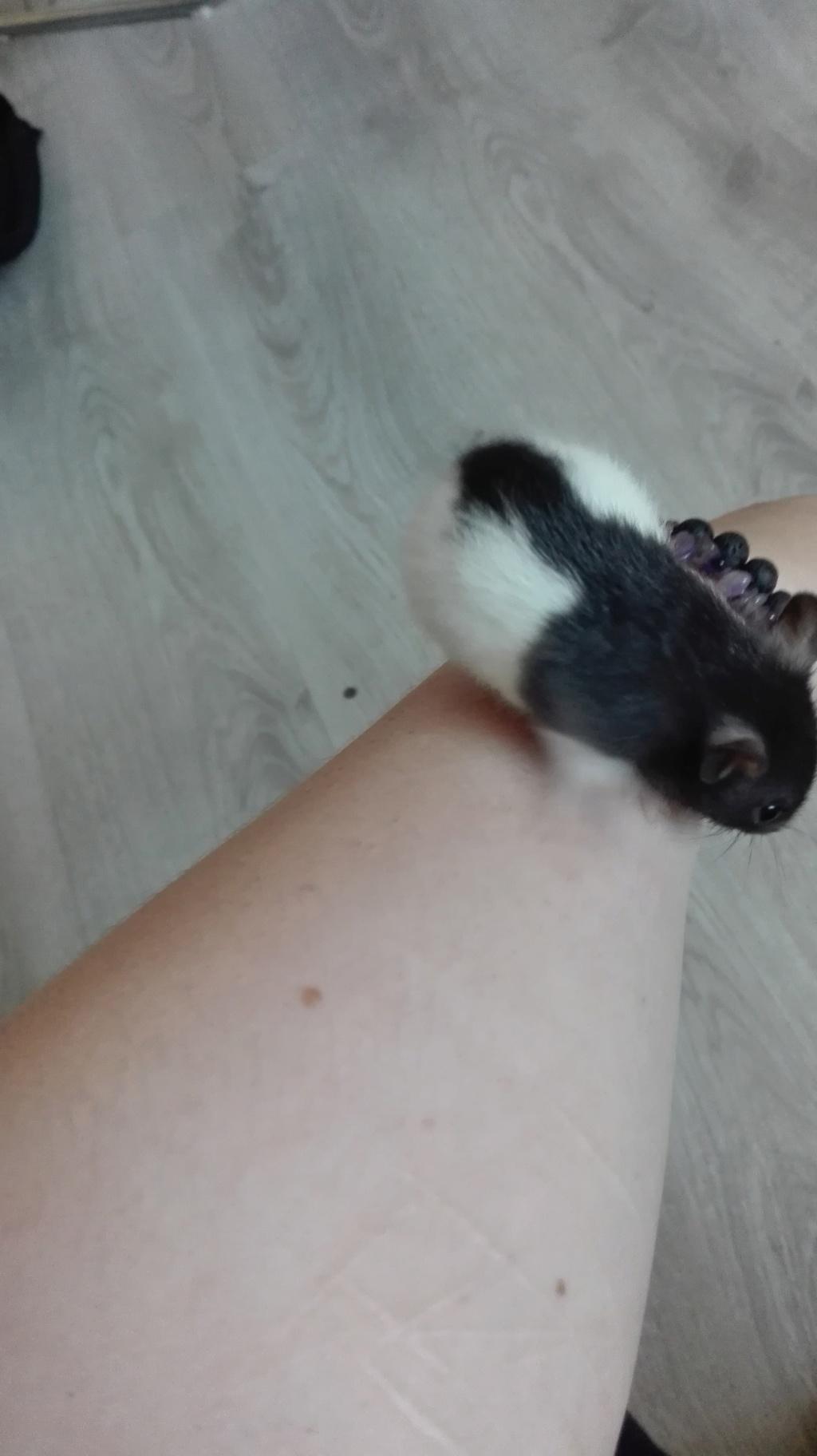 11 petits ratons ! 110