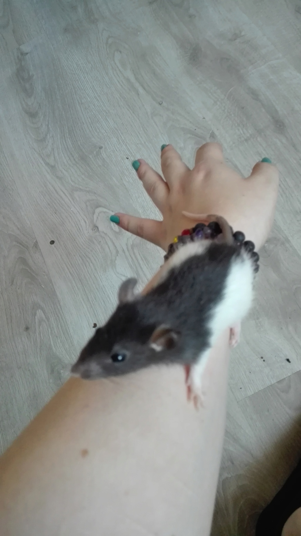 11 petits ratons ! 112