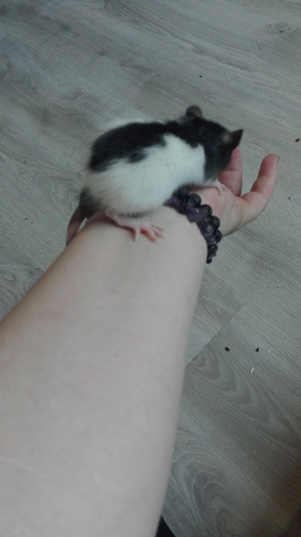 11 petits ratons ! 116