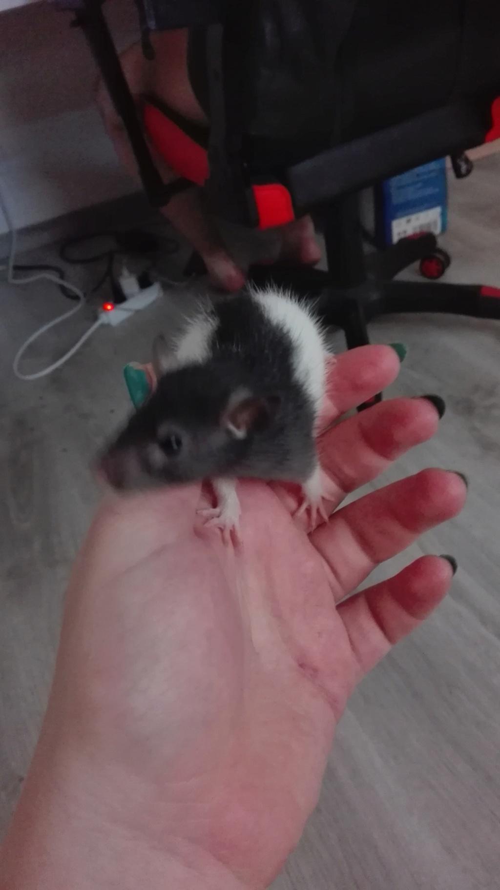 11 petits ratons ! 118