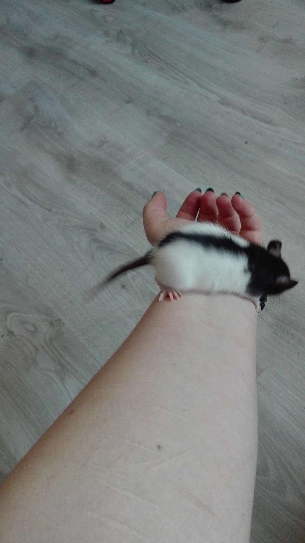 11 petits ratons ! 211