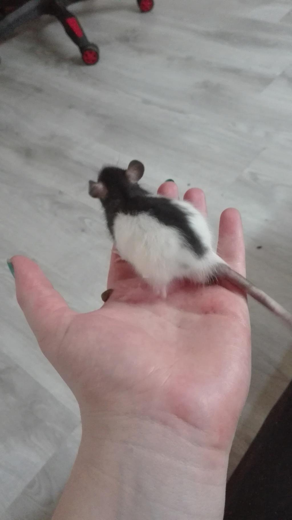 11 petits ratons ! 219