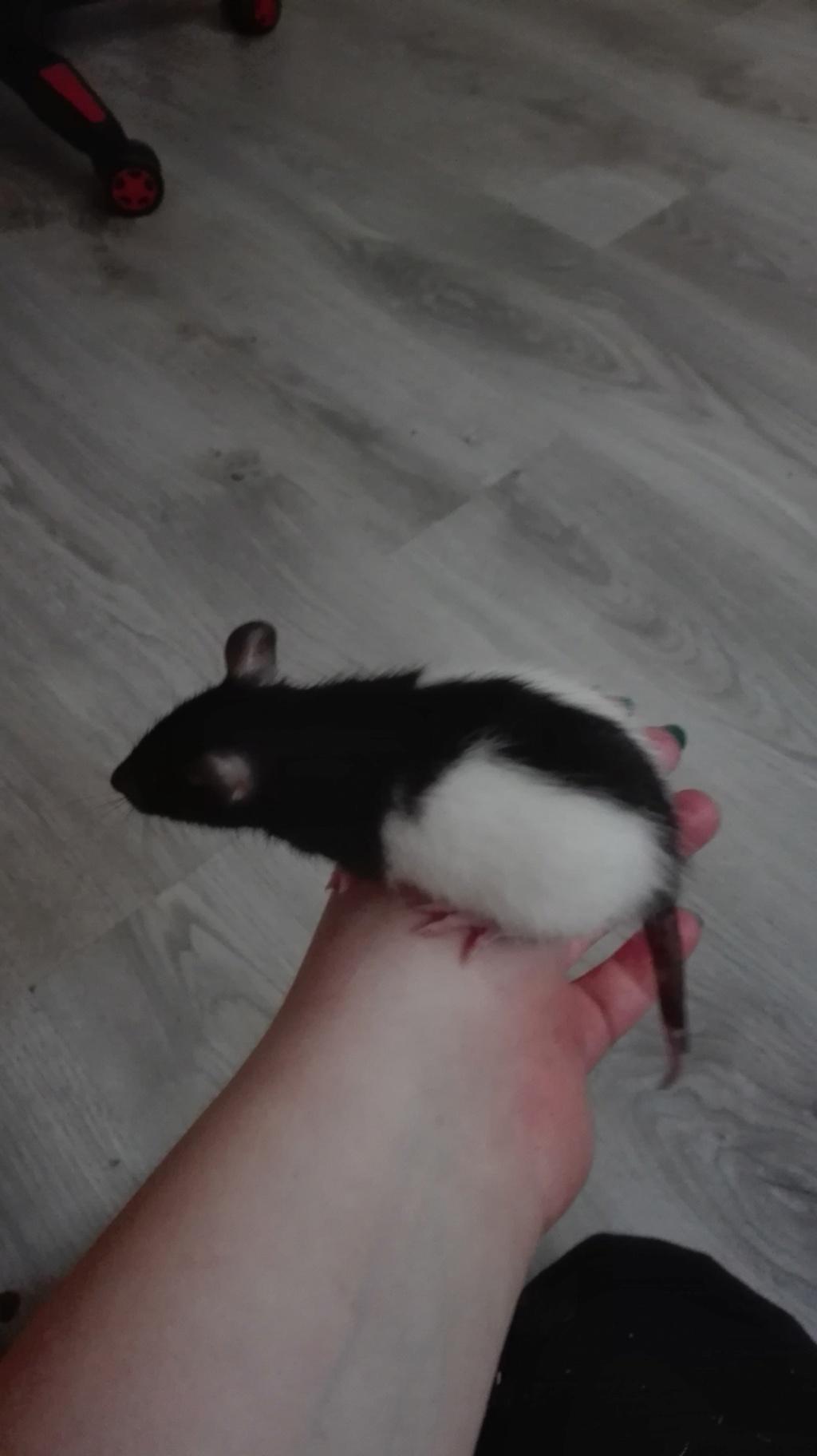 11 petits ratons ! 220