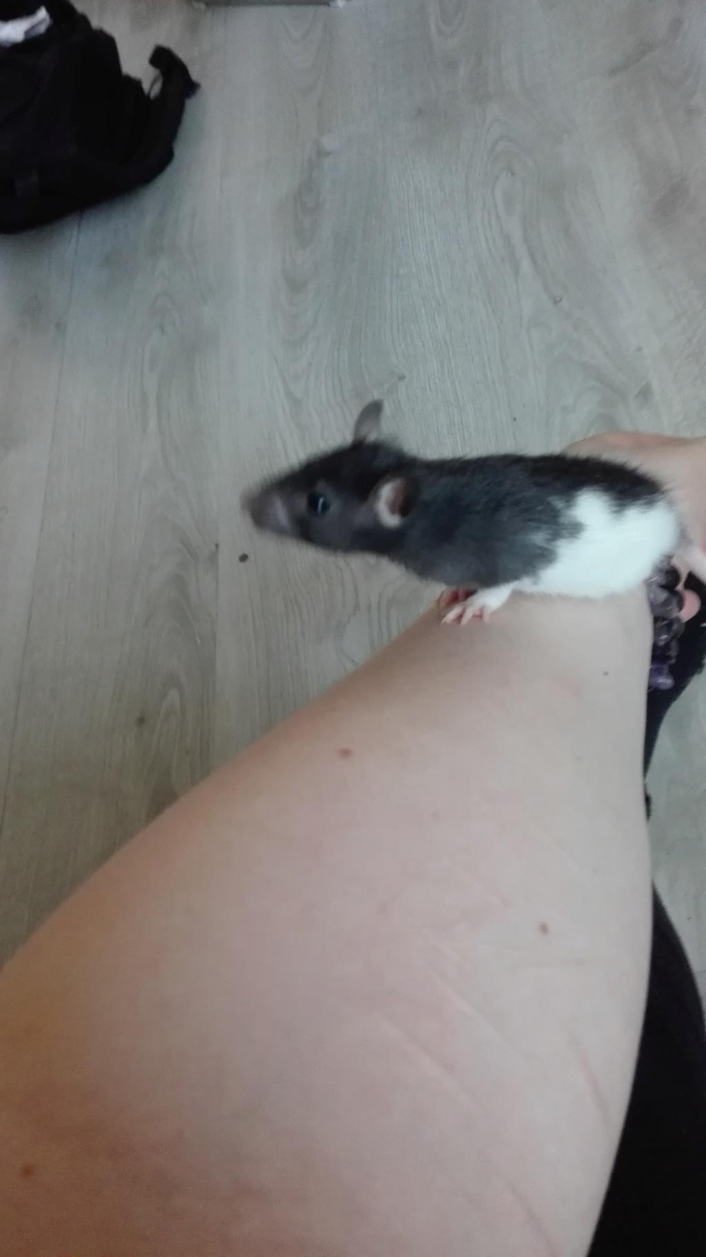 11 petits ratons ! 314