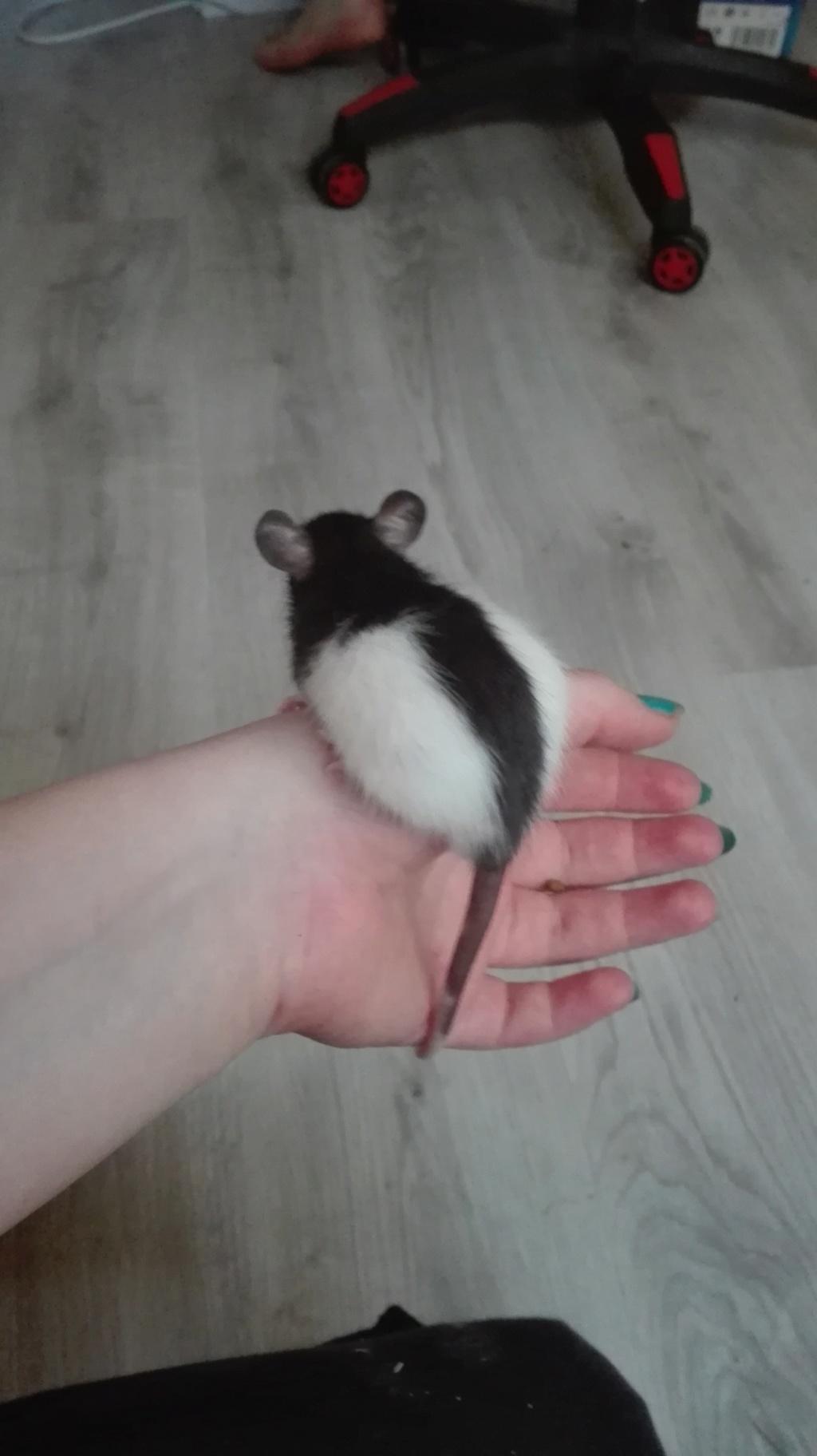 11 petits ratons ! 317