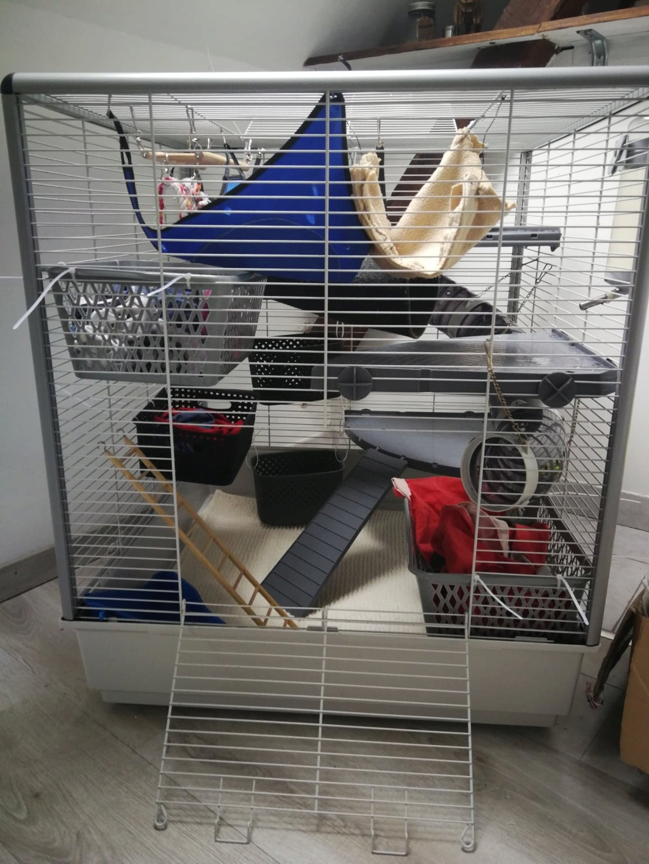 Photos de vos cages - Page 12 59868510