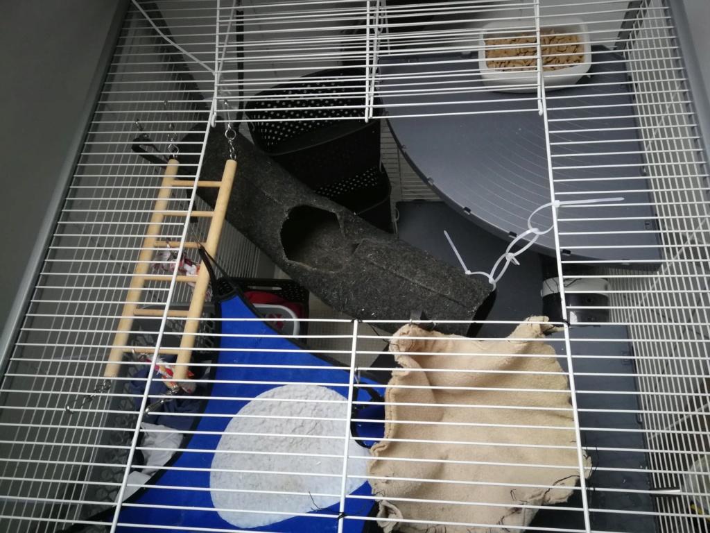 Photos de vos cages - Page 12 60217310