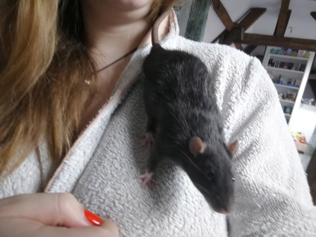 15 ratons à adopter !  - Page 6 60355610