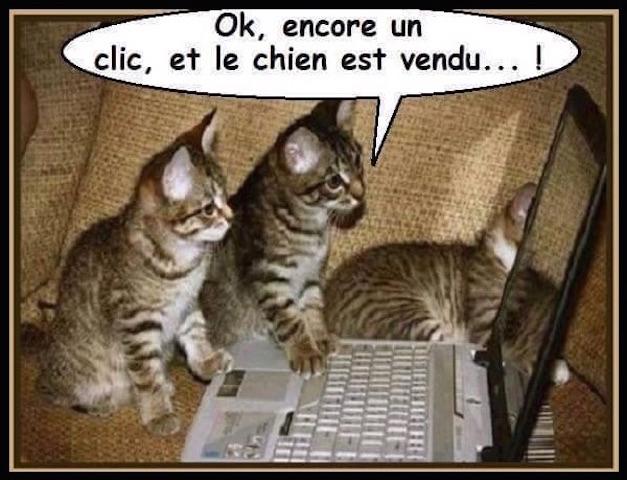 Chats alors !!! 11865010