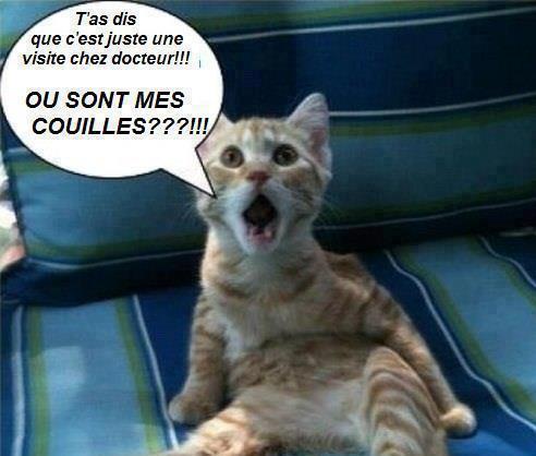 Chats alors !!! 3fc99410