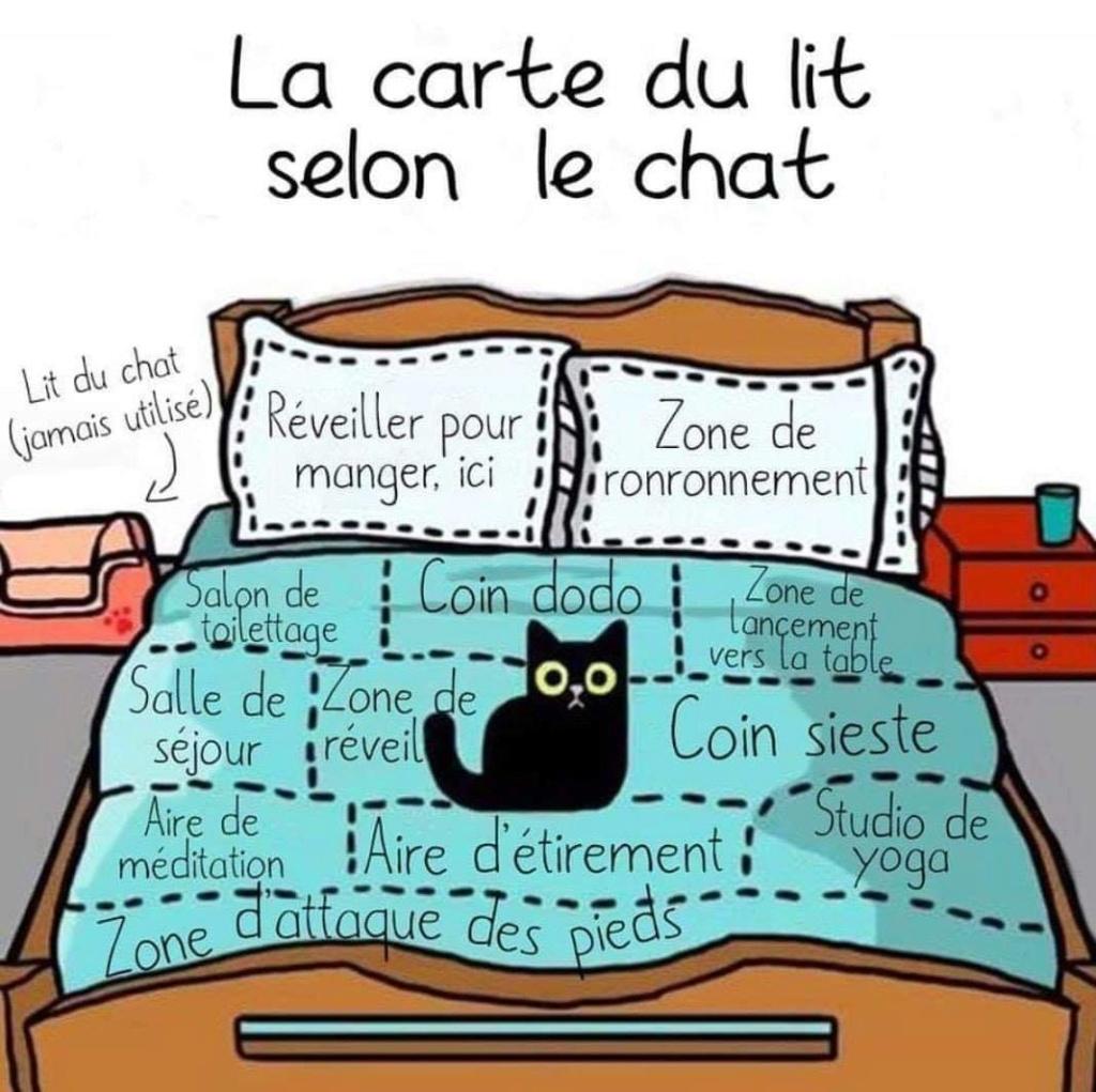 Chats alors !!! La-car10