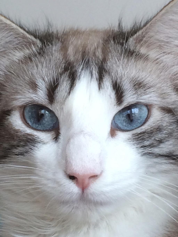 Photos des chats sauvés, avant/après - Page 11 6d6b2710