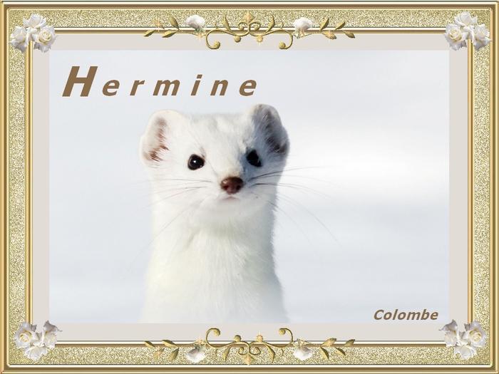 Alphabet animé H / Hyène-hippocampe Diane-12