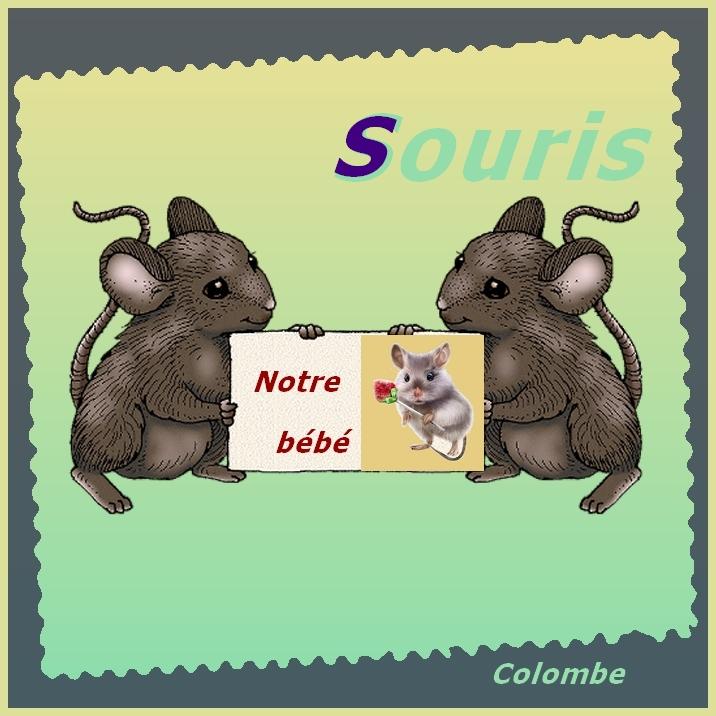 Alphabet animé S / Souris Diane-15