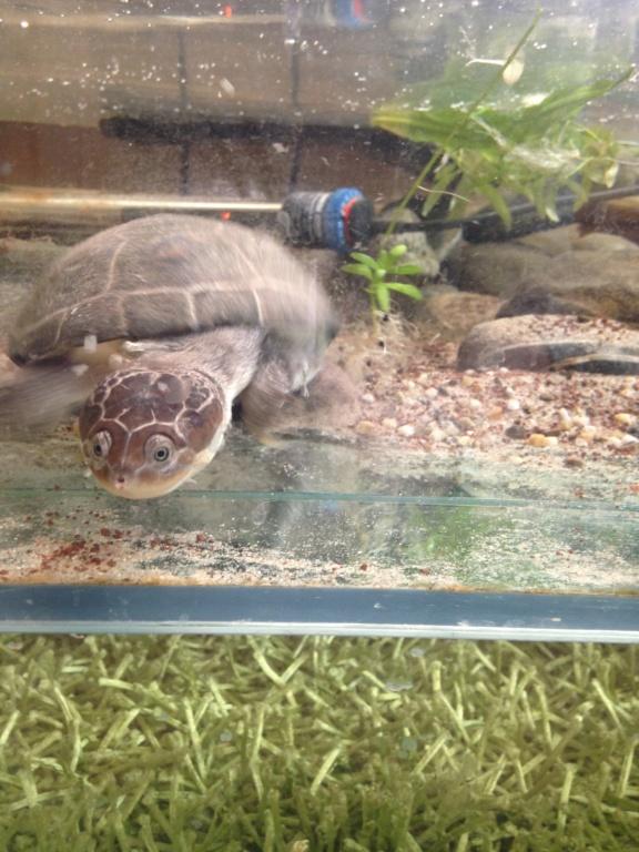 Les voicis! Chiens, chat, tortue, axolotls... Img_0810