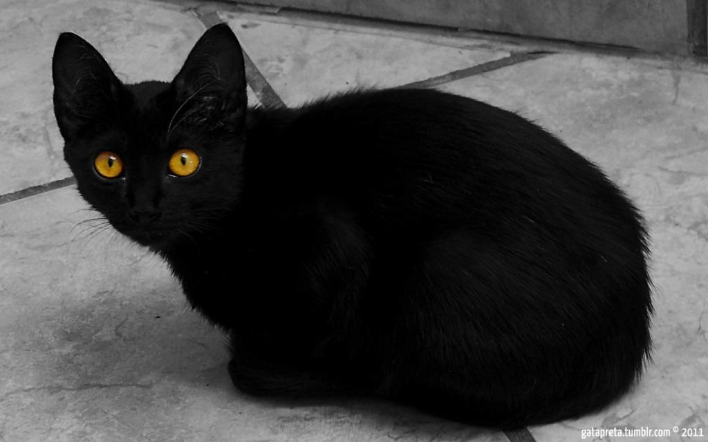 Nightkit my first cat 16c51111