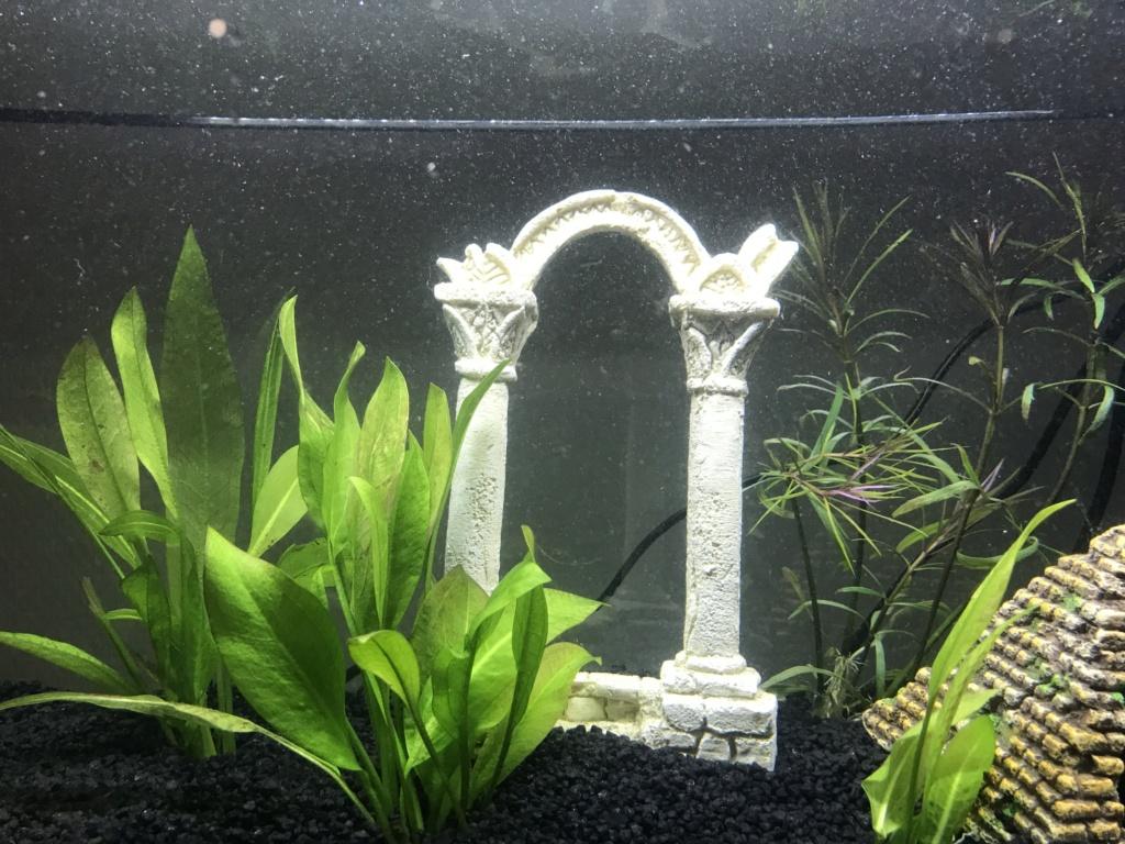 Lancement aquarium, quelques semaines et particules, poussie Img_1912
