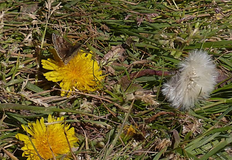 Petit papillon Petit_10