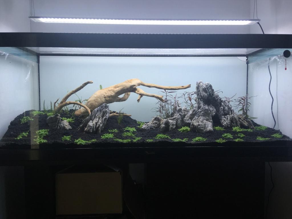 Aquarium amazonien 150L en DSM Image010