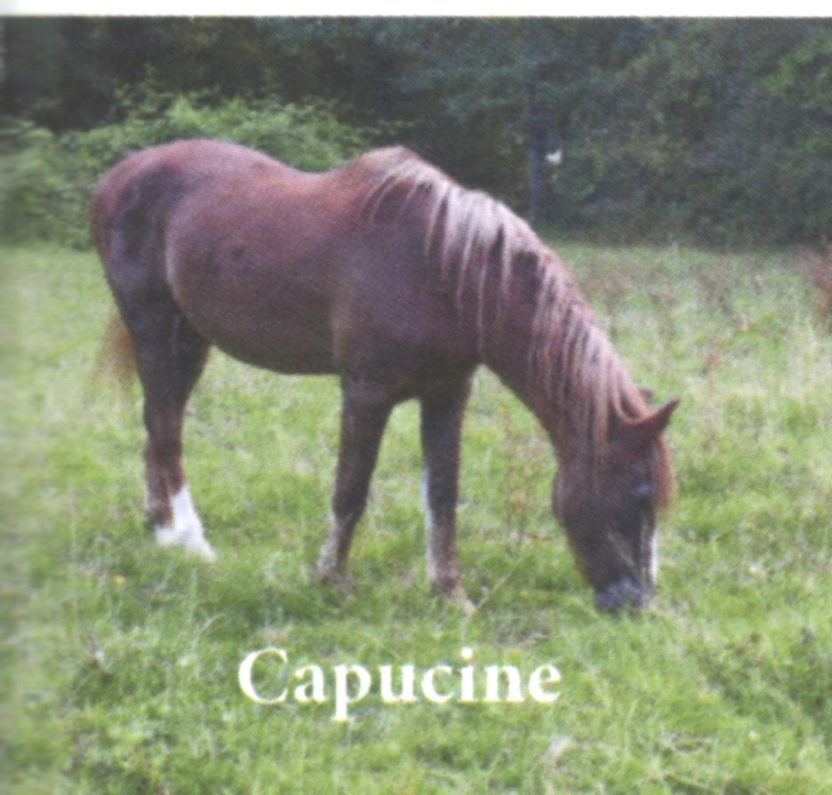 GITANE & CAPUCINE - nées en 1988 - accueillies en mars 2009 chez Pech-Petit  - Page 2 Capuci10
