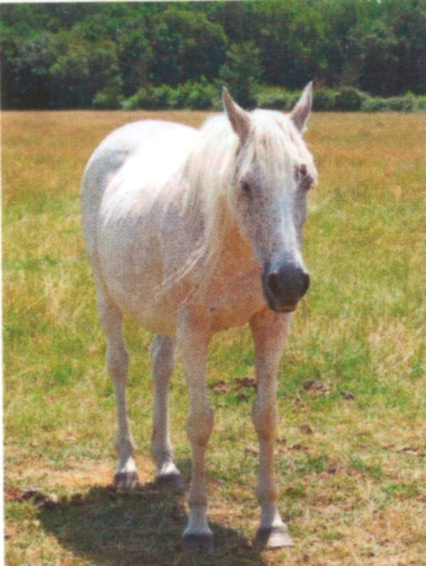 DUCHESSE - OI née en 1991 - accueillie en octobre 2014 chez Pech-Petit - Page 6 Duches11