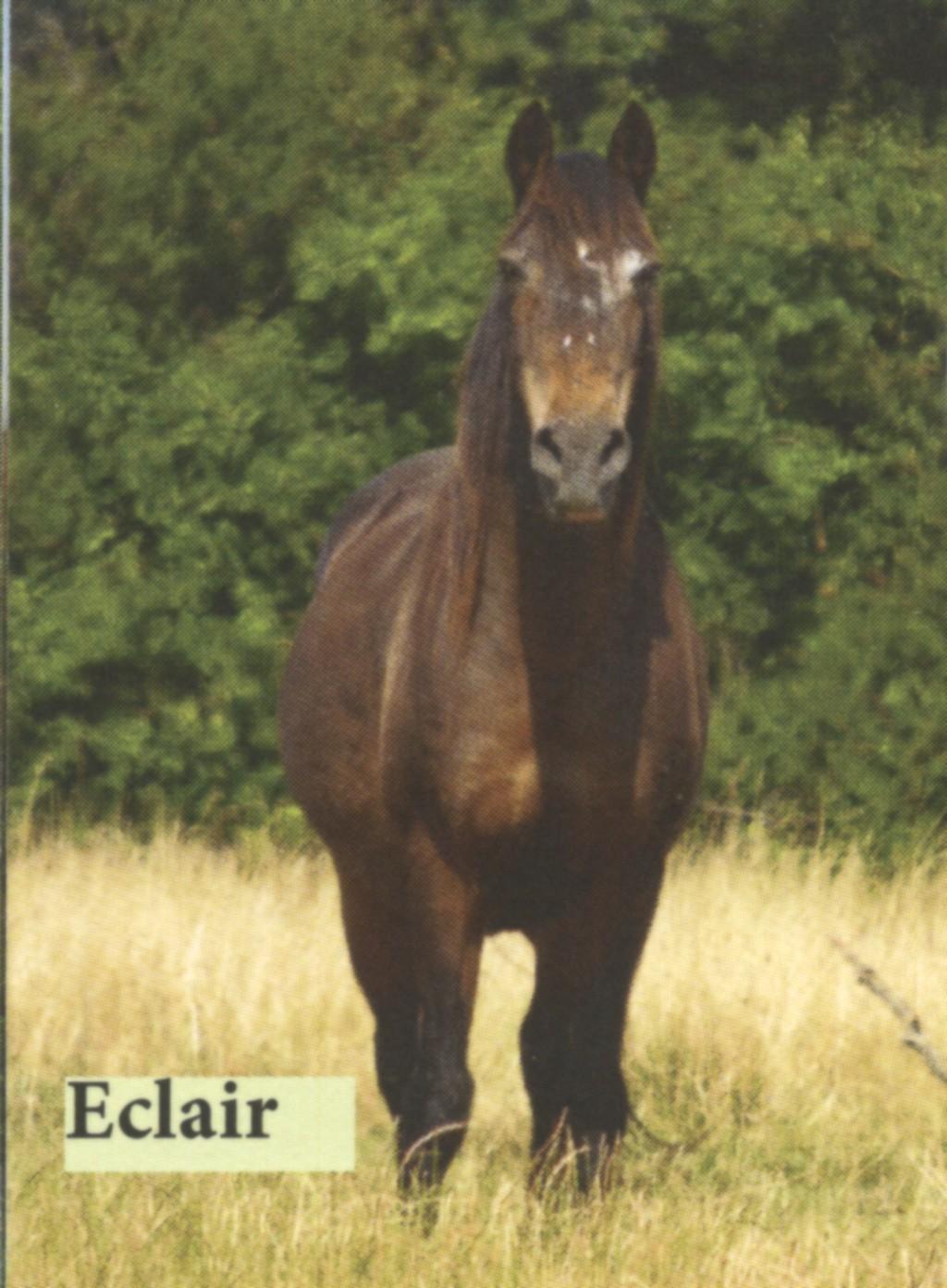 ECLAIR - OI poney né en 1992 -  accueilli chez Pech-Petit en janvier 2017 Eclair10