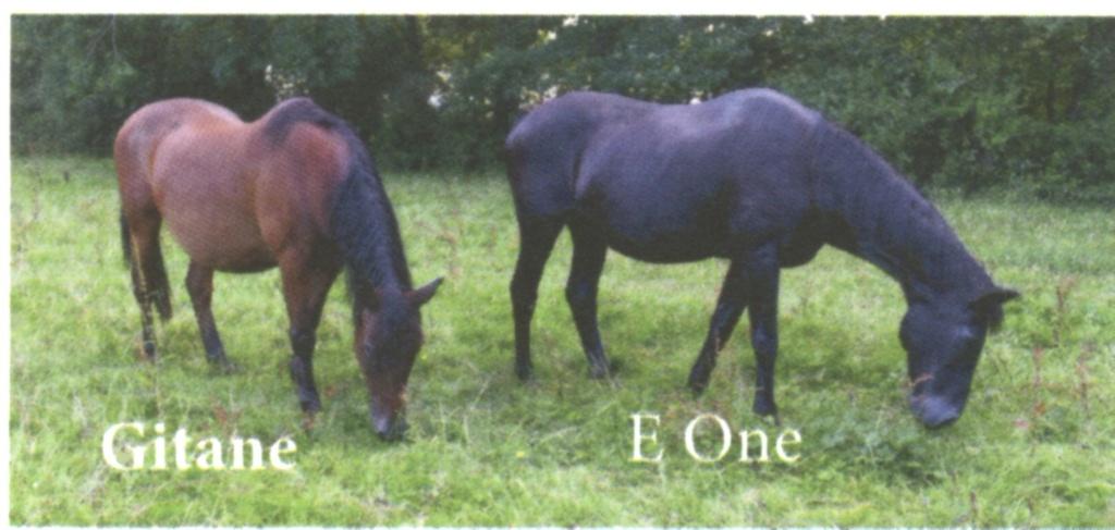 GITANE & CAPUCINE - nées en 1988 - accueillies en mars 2009 chez Pech-Petit  - Page 2 Gitane11