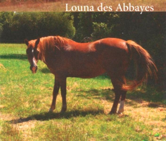 LOUNA - Pottok née en 1999 - accueillie chez Pech-Petit en septembre 2017   Louna10