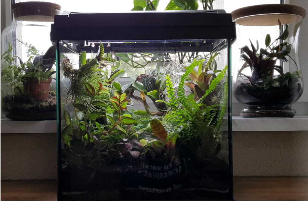 Verwandlung Aquarium in Orchideen-Vitrine Vitrin10