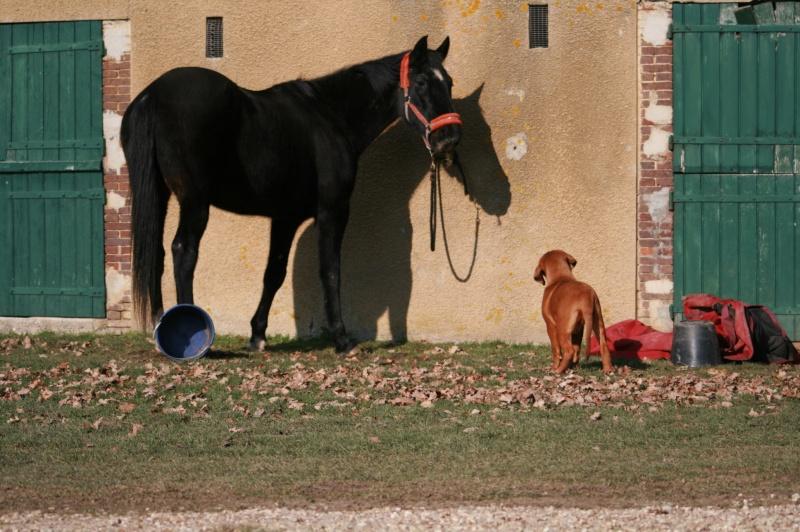 bébés  dogue  de bordeaux  et  frere  du bebe  de chicco Img_8719