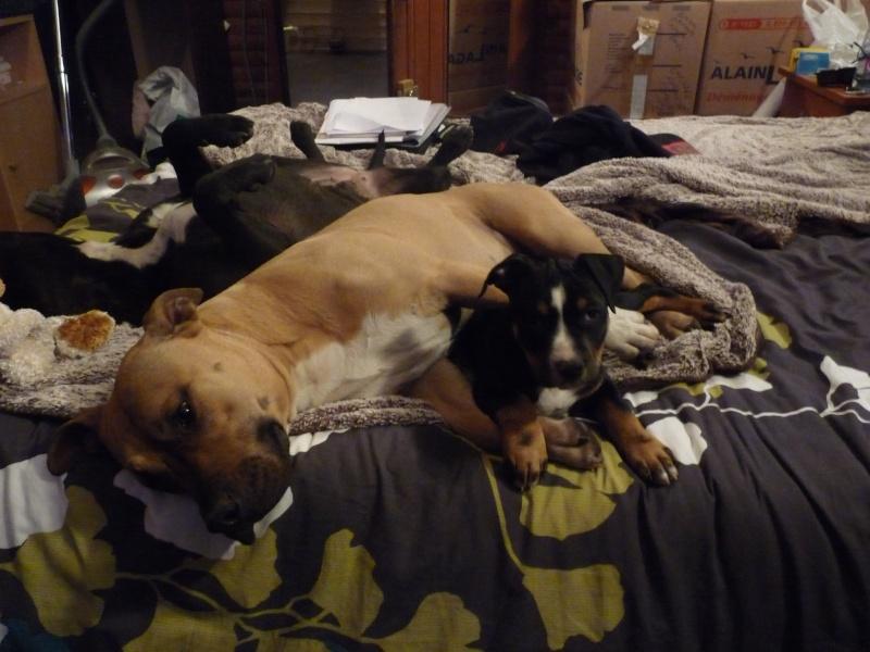 A adopter : Freezbee P1030613