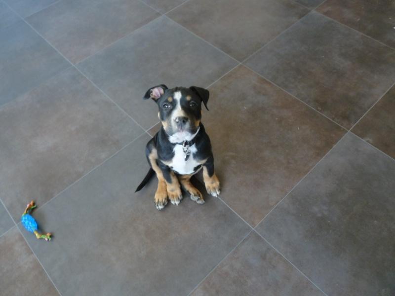 A adopter : Freezbee P1030710