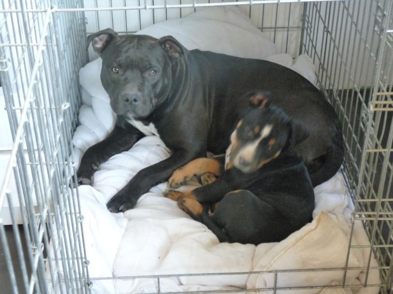 A adopter : Freezbee P1030711