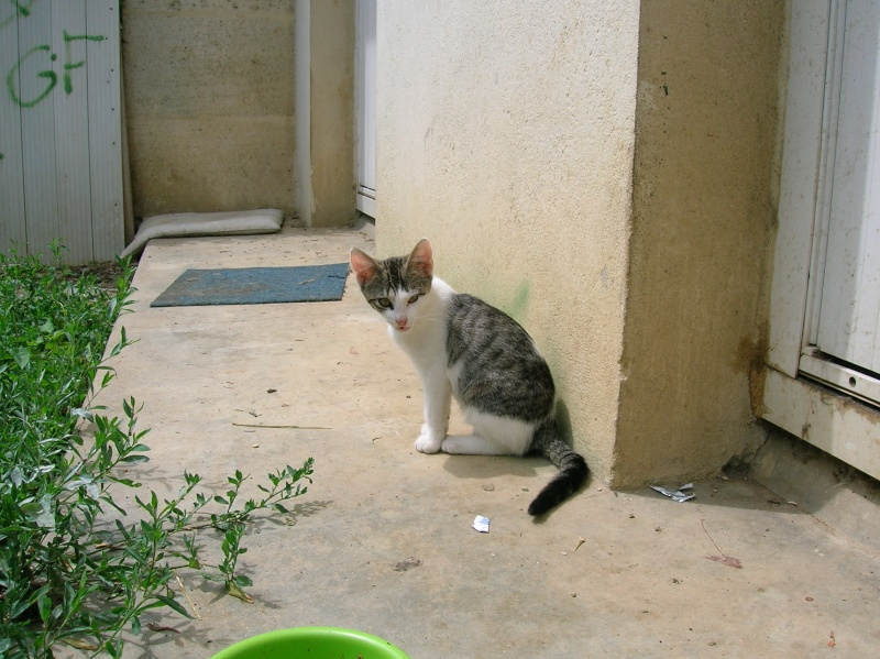 Lino et Nolan, chatons nés le 1er avril, sauvetage suite à expulsion dans le 60 Dscn1029