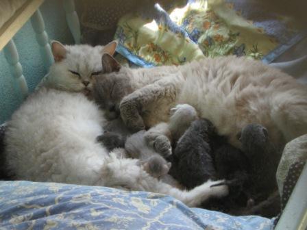 Quand deux chattes s'aiment... Mathil22
