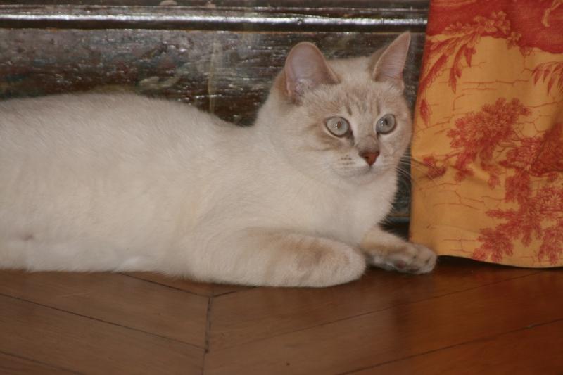 5 chatons pour bonne famille Img_7110