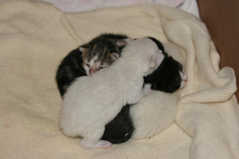 5 chatons pour bonne famille Img_7112