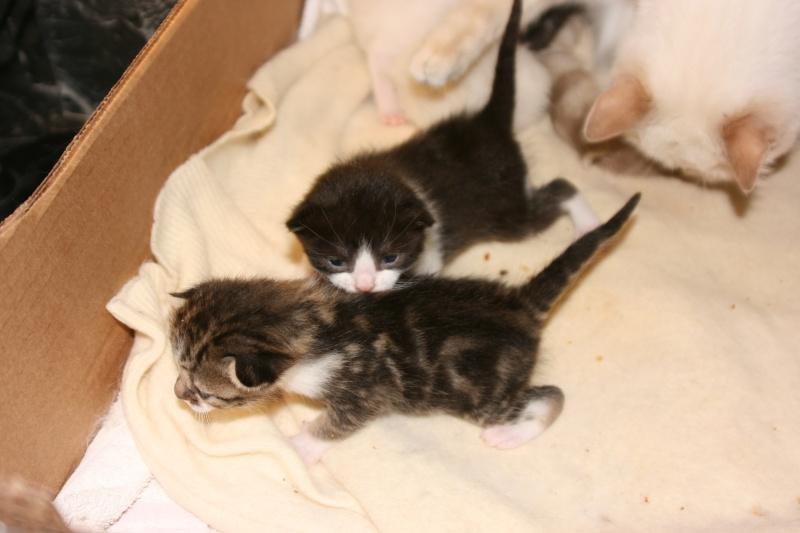 5 chatons pour bonne famille - Page 2 Photo_26