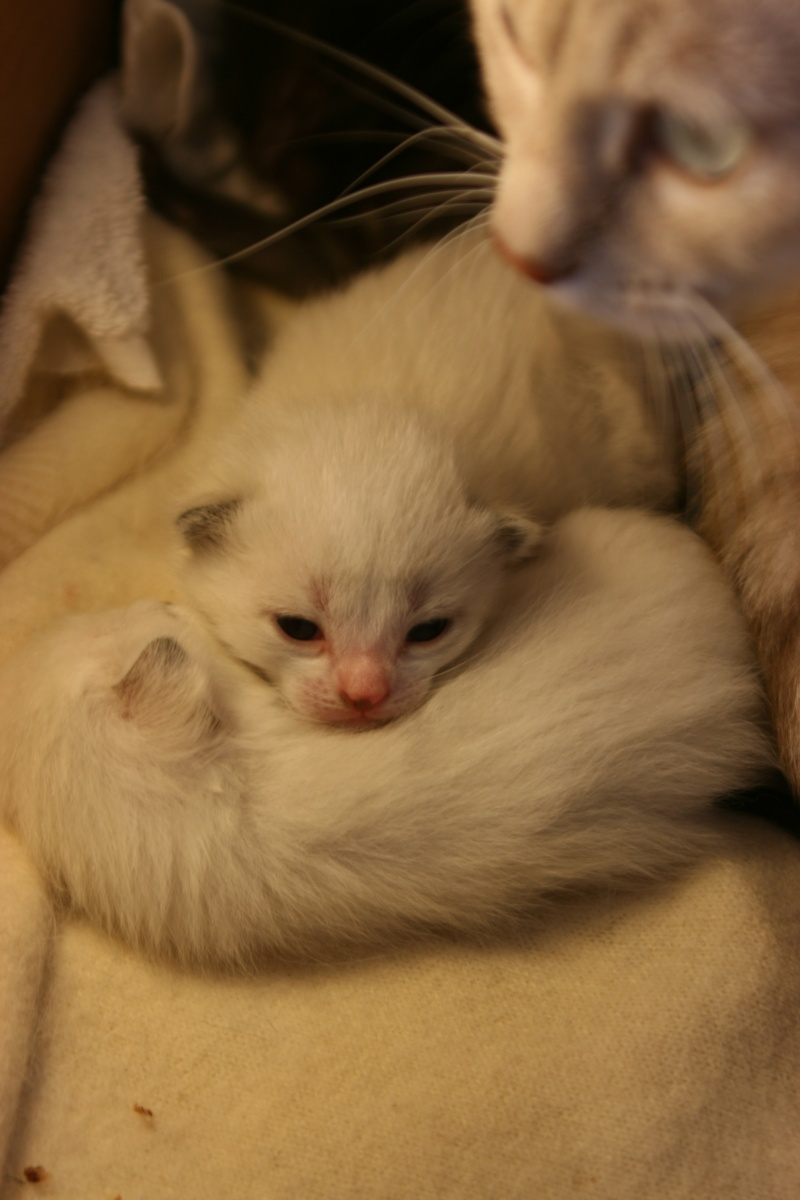 5 chatons pour bonne famille - Page 2 Photo_27
