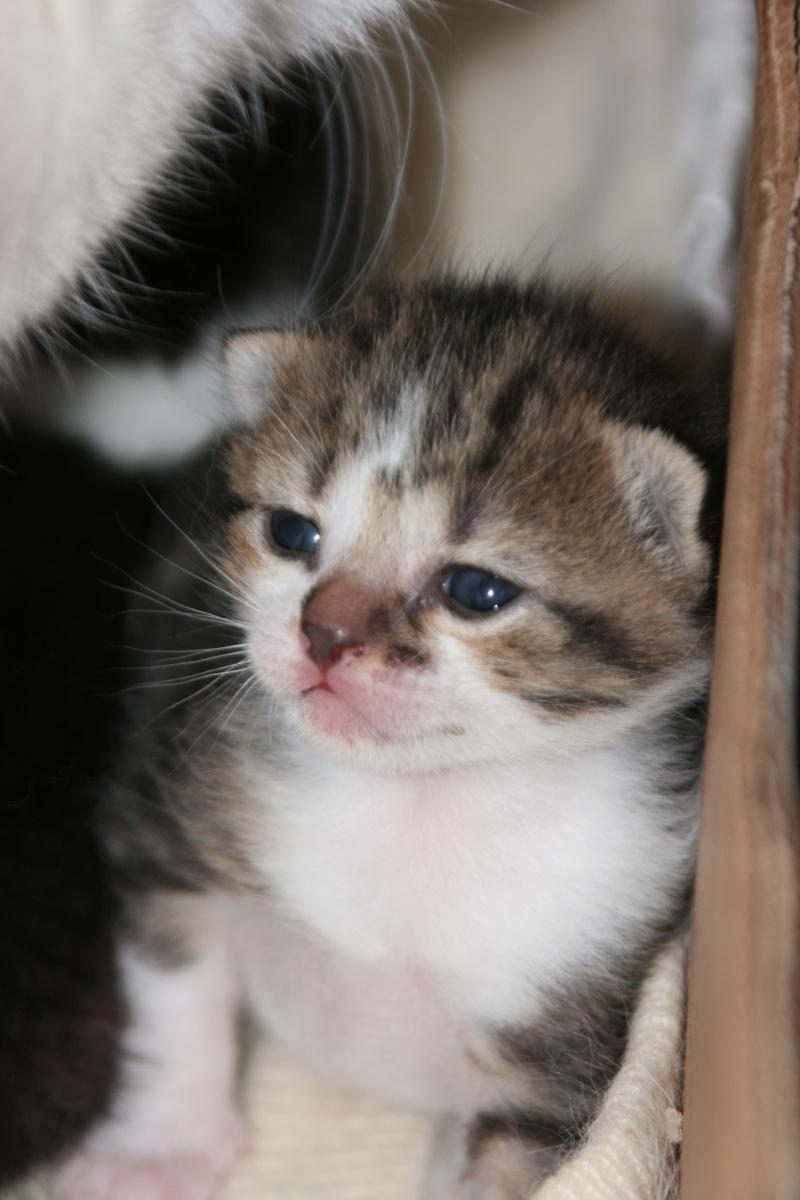 5 chatons pour bonne famille - Page 2 Photo_28