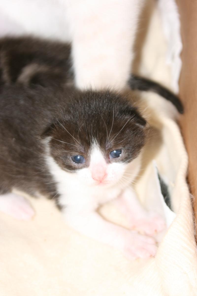 5 chatons pour bonne famille - Page 2 Photo_29
