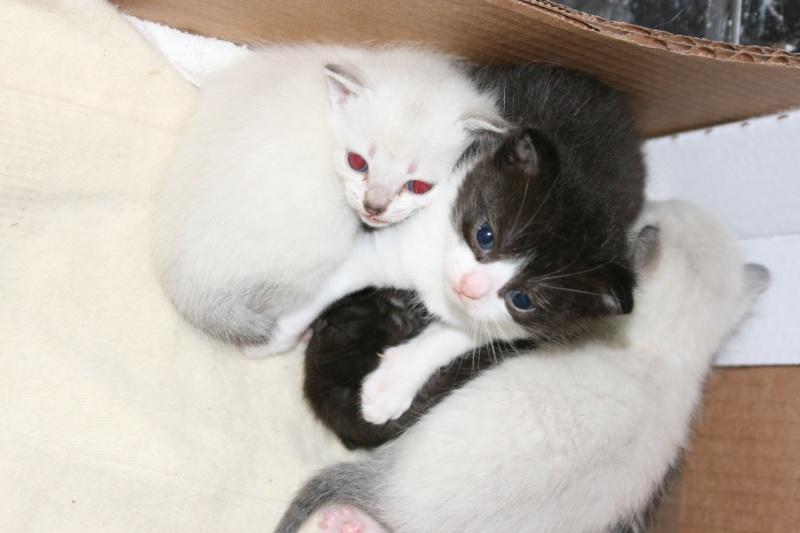 5 chatons pour bonne famille - Page 2 Photo_33