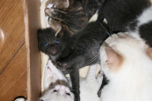 5 chatons pour bonne famille - Page 2 Photo_35