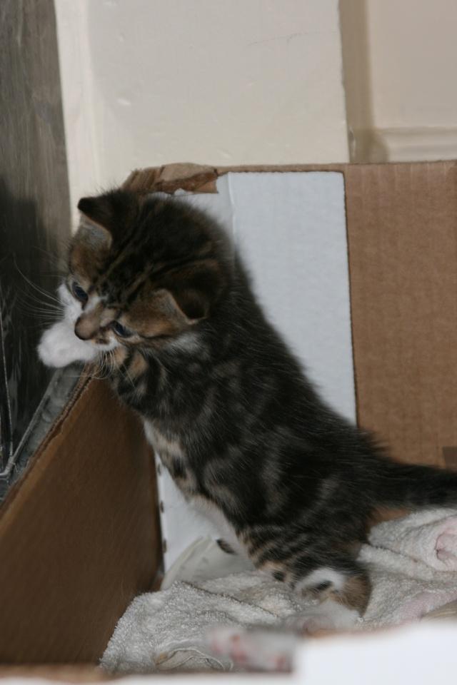 5 chatons pour bonne famille - Page 3 Photo_37