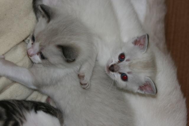5 chatons pour bonne famille - Page 3 Photo_40