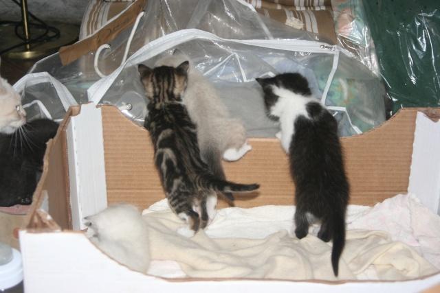 5 chatons pour bonne famille - Page 3 Photo_41