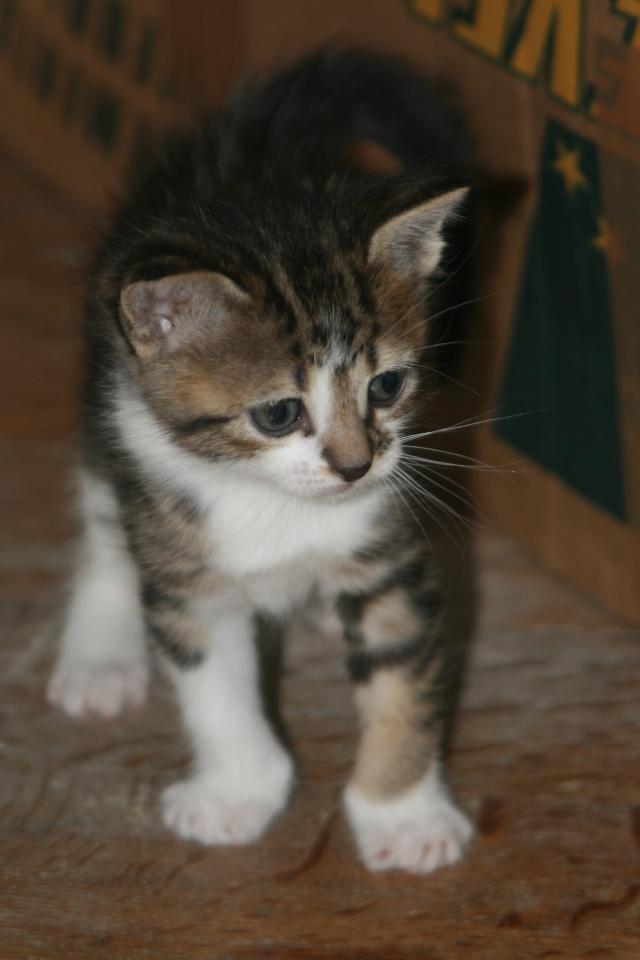 5 chatons pour bonne famille - Page 3 Photo_42